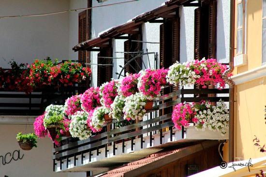 Идеи оформления балкона цветами