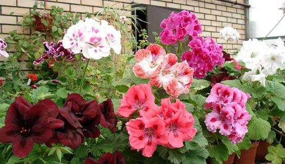 Старайтесь сажать цветы, подходящие друг другу по уровню.