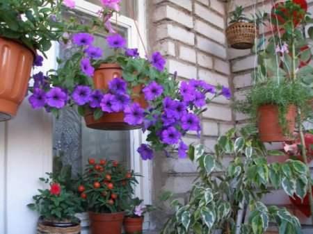 Летние цветы для балкона