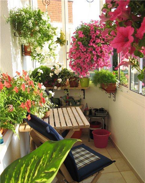 Оранжерея на балконе для цветоводов-любителей
