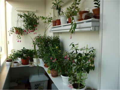 Как расставить цветы на балконе