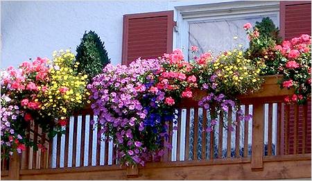 Цветы на балконе, которые будут цвести всё лето
