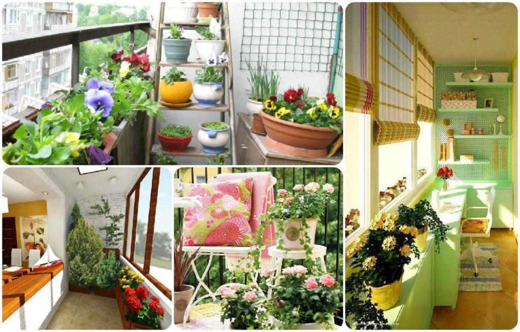 Идеи озеленения балконов и лоджий