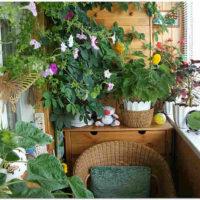 Зимний сад на балконе или в лоджии.